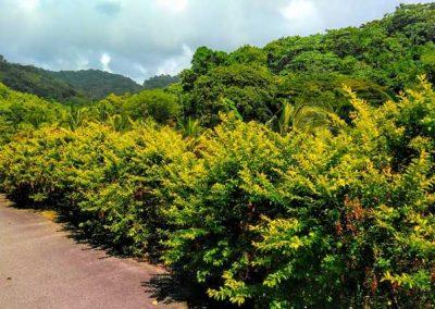 Cocoa Estate & Argyle Falls