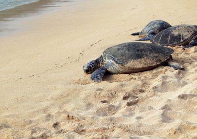 Snorkel. Hike. Play. Eat, Drink. Explore. Island Girl Tours Tobago. Fish. Bird watch. Swim. Diving. Deep Sea Fishing