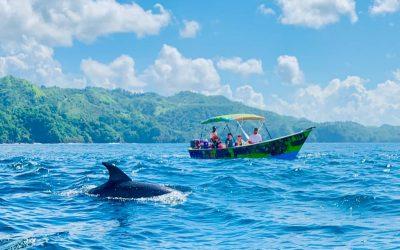 Caribbean Coast Swimming + Snorkelling Tour